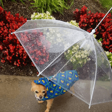 Don't Get Caught in the Rain Without One of These Umbrellas for Your Dog That's Also a Leash