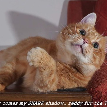 NOW~~  Heer comes my SHARK shadow.. reddy fur the TEEF?
