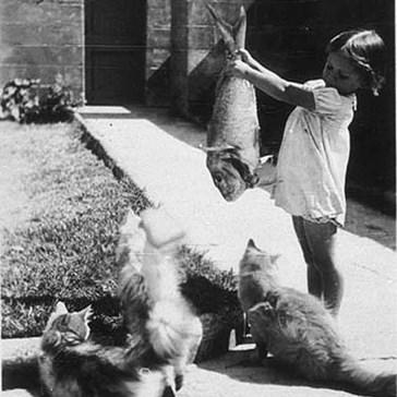 Sadly, Jennifer became part of the feeding frenzy