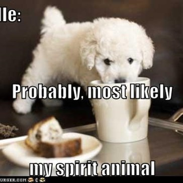 Poodle: Probably, most likely  my spirit animal