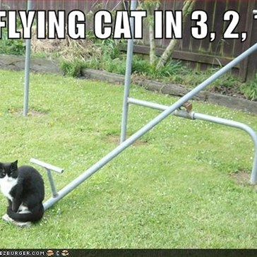 FLYING CAT IN 3, 2, 1