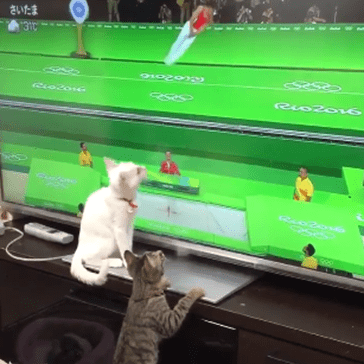 Kittens Get a Kick Out of the Olympics