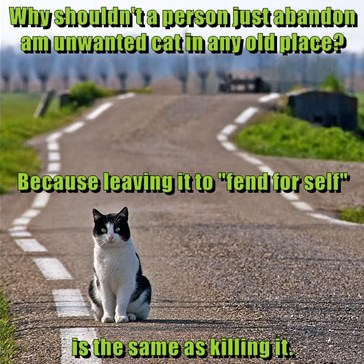 "Why shouldn't a person just abandon am unwanted cat in any old place?  Because leaving it to ""fend for self"" is the same as killing it."