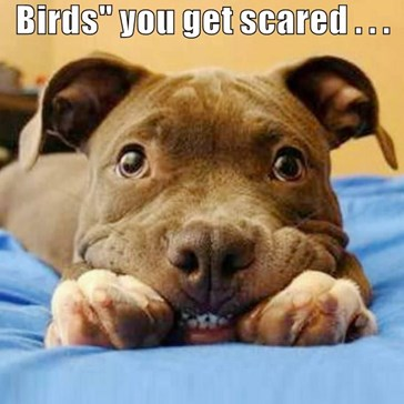 "When you watch ""The Birds"" you get scared . . .   I just see lunch!"