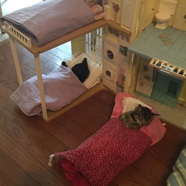 Itty Bitty Kitty Sleepover