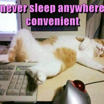never sleep anywhere convenient