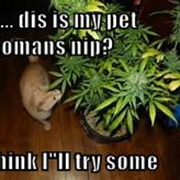 """so... dis is my pet hoomans nip?  I think I""""ll try some"""