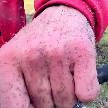 No Thank You Nature Video of the Day: F*ck Ton of Midges Attack Scottish Dude