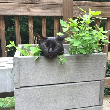 So That's How You Make Catnip