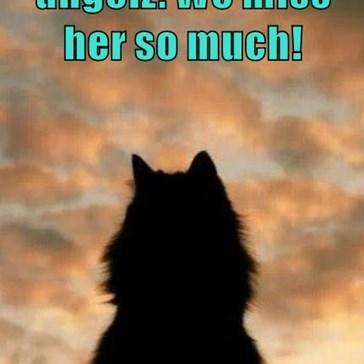 Ur deer Sylvia iz up thar  wif teh angelz. We miss her so much!