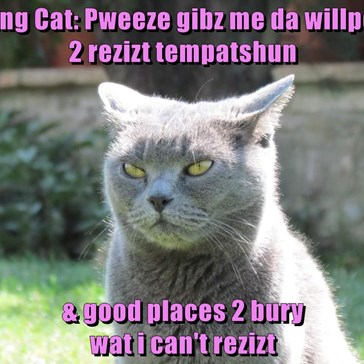 Ceiling Cat: Pweeze gibz me da willpower                     2 rezizt tempatshun   & good places 2 bury                                                                                         wat i can't rezizt