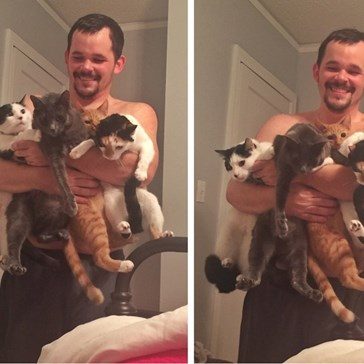 "Behold the Extremely Rare ""Quadruple Cat Scoop"""