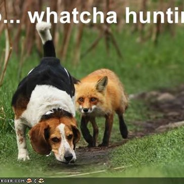 So... whatcha huntin'?
