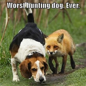 Worst hunting dog. Ever.