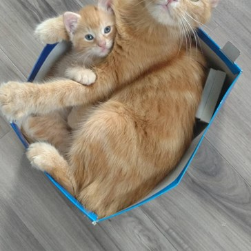 If We Fits, We Sits: Mother and Son Edition