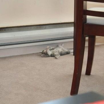 Heater: 1, Kitten: 0