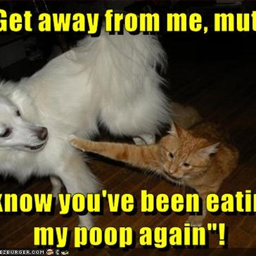 """Get away from me, mutt!  I know you've been eating my poop again""!"