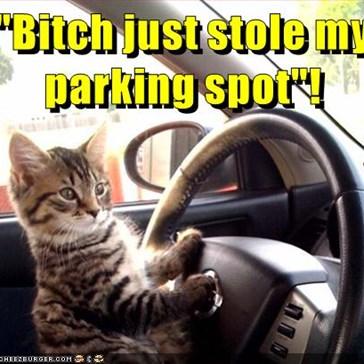 """Bitch just stole my parking spot""!"