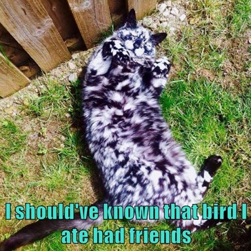 I should've known that bird I ate had friends