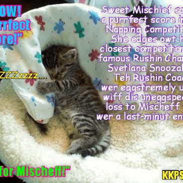Rio LoLympics News Flash: After scoring a hard-fawt win in teh Shark Fighting Event, littl Mishief wer somwhat tired... But dat helped her score anudder unexpected Gold Medal in teh fiercely contested Napping Competition (Ittie Bittie Division)!