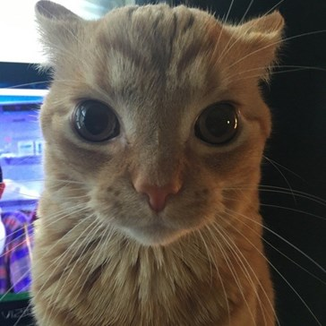 If Your Cat Is Making This Face, You're About to Have a Bad Time