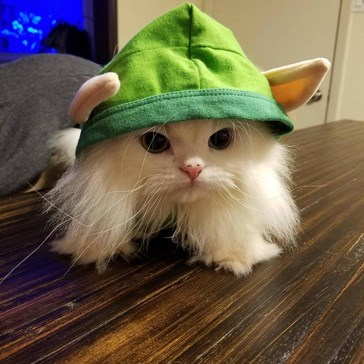 Little kitty elf