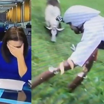 Local TV News Anchor Loses It When She Tries to Report on the Man Who Lived as a Goat