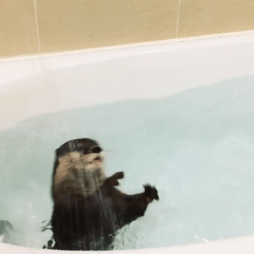 Pet Otter Goes Nuts During Bathtime