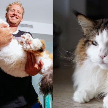 Meet Samson AKA Catstradamus, the Largest Cat in New York City