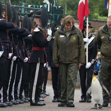 There's a Famous Penguin Knight in Norway Who Was Just Promoted to Brigadier General