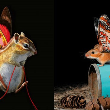 Talented Artist Creates Colorful Works of Art With Fake Creatures