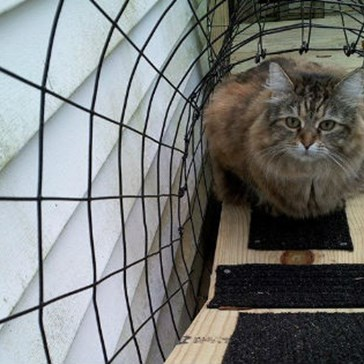"Someone Built a Custom ""Kitty Kastle"" for Their Indoor Cats so They Can Go Outside"