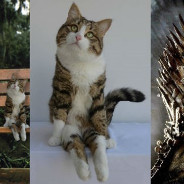 Take a Seat and Check out This Disabled Kitty's Awesome Photoshop Battle