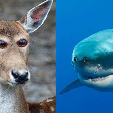 So, This Is What Animals Would Look Like if Their Eyes Were at the Front of Their Heads