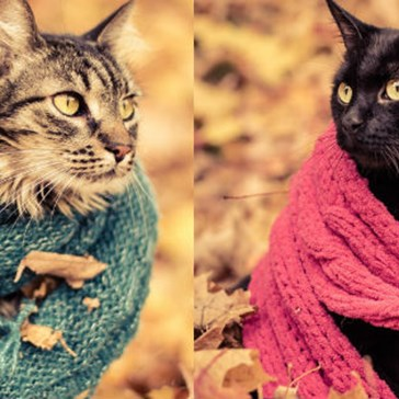The Best Thing About Fall Is This Cozy Photoshoot With Cats Wearing Scarves
