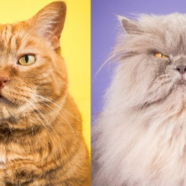'Fat Cats' Is a Colorful Collection of Pleasantly Plump Feline Portraits