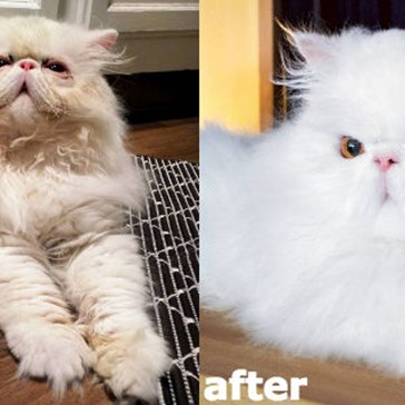 Brimley the Cat Is an Instagram Star These Days, but His Life Wasn't Always Purrfect