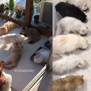 "There's a Real ""Crazy Cat Lady"" on Instagram Who's Adopted Twelve Persian Floofs"