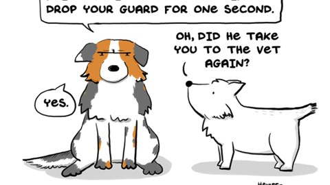 funny animal problems