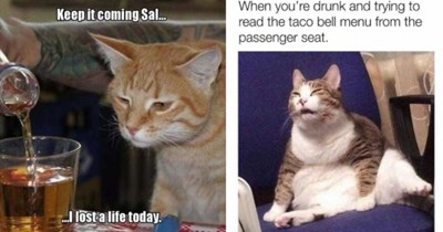 funny drunk cat memes   weary looking orange cat watching a drink being poured into a cup: Keep coming Sal. I lost a life today. cat squinting: drunk and trying read taco bell menu passenger seat.