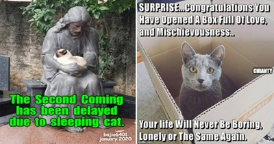 lolcats cats funny memes lol meme cat animals aww cute | cat sleeping in the arms of a statue of a praying man: Second Coming has been delayed due sleeping cat. grey cat looking out of a cardboard box: SURPRISE.Congratulations Have Opened BoX Full Love, and Mischievousness. life Will Never Be Boring, Lonely or Same Again.