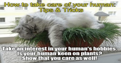 cats memes tips tricks funny cute adorable aww lol lolcats animals | grey fluffy cat sleeping on top of a plant. take care human: Tips Tricks Take an interest human's hobbies. Is human keen on plants? Show care as well!