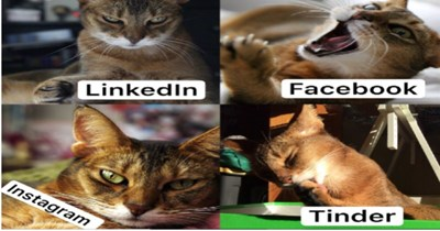 how you present yourself on different social media meme linkedin facebook instagram tinder dolly parton funny cats serious playful professional