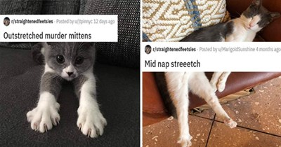 straightened feetsies cats cute funny lol reddit animals aww adorable | cute grey and white kittens with its claws out Outstretched murder mittens. sleeping cat stretching its back legs out Mid nap streeetch