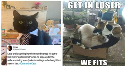 "cats funny memes lol animals cat | Munya @WanderinVoyager Little bro is working home and wanted his cat look more ""professional he appeared webcam during team (video) meetings so he bought him set ties QuarantineCats 