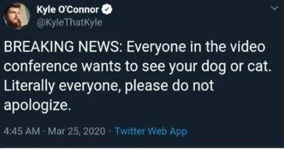 Fresh animal memes | Kyle O'Connor @KyleThatKyle BREAKING NEWS: Everyone video conference wants see dog or cat. Literally everyone, please do not apologize. 4:45 AM Mar 25, 2020 Twitter Web App