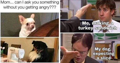 doggo dogs funny memes dog animals cute aww lol | Mom can ask something without getting angry dog with glasses looking up from sewing machine | the office making turkey sandwich My dog, expecting slice