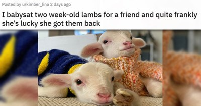 cute cuteness animals aww adorable pics vids gifs | I babysat two week old lambs for a friend and quite frankly she's lucky she got them back two cute baby sheep in knitted sweaters