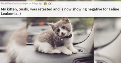 cats funny cute aww lol adorable vids pics reunited lost found love animals | My kitten, Sushi, was retested and is now showing negative for Feline Leukemia small cat with a bell tied to its neck