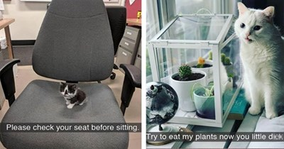 cats snaps snapchat funny cat caturday aww cute funny lol animals | kitten on an office chair Please check seat before sitting | white cat next to a glass box filled with small plants Try eat my plants now little dick